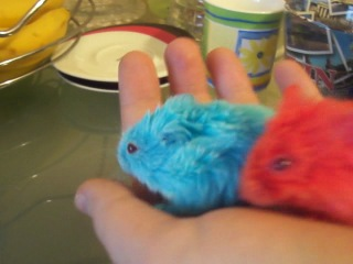 Blue'n'Red Hamsters